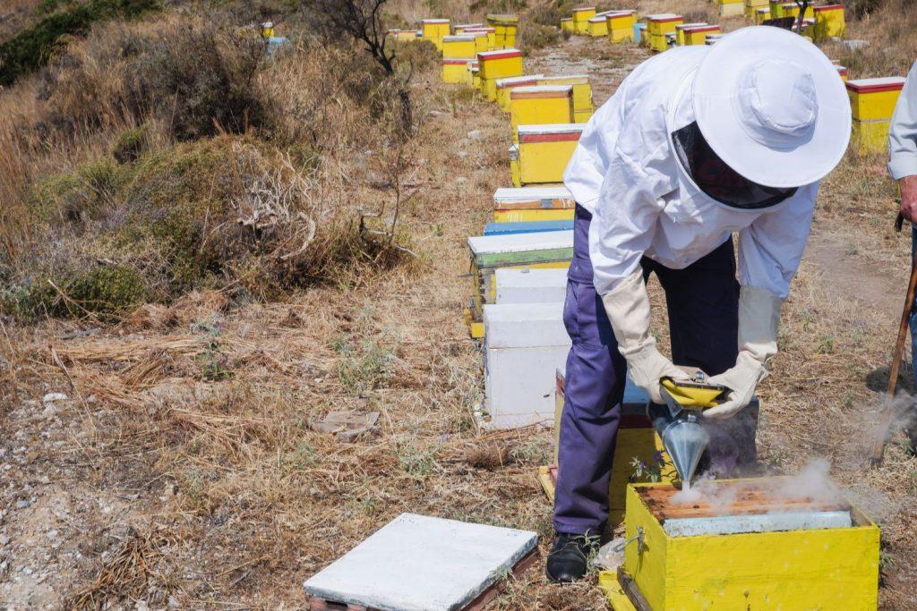 Beekeeper in Argolida